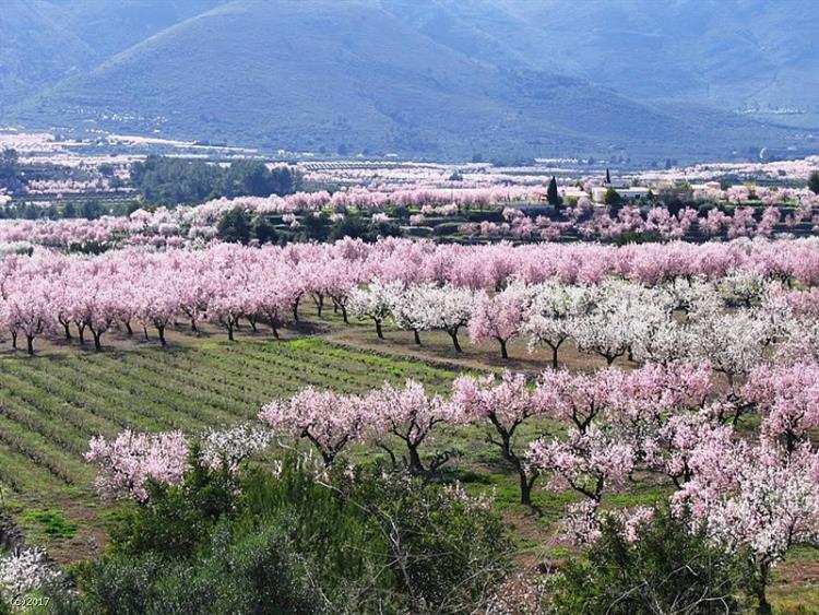 Jalon Valley